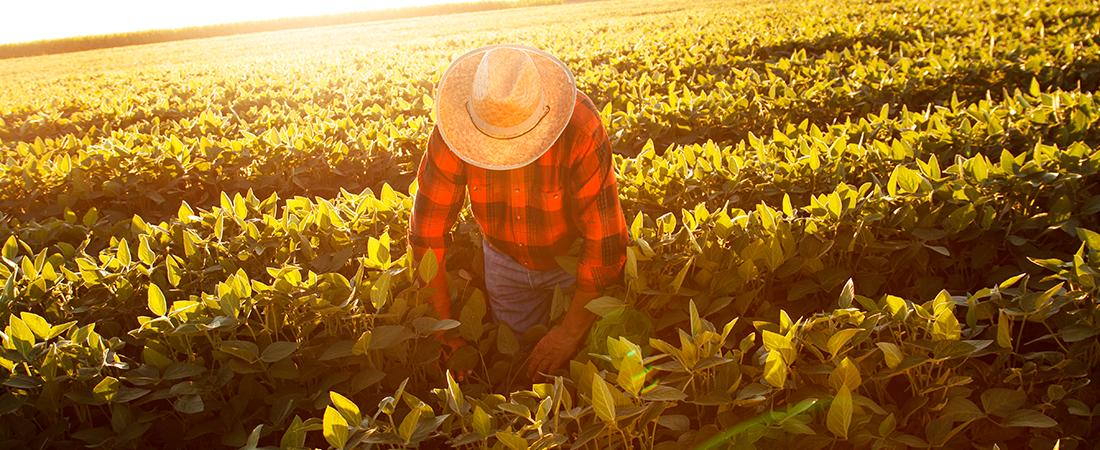 Impulsar el campo mexicano